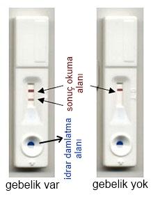 Gebelik-Testi-Nasil-Uygulanir-i-16_a9f2a.jpg