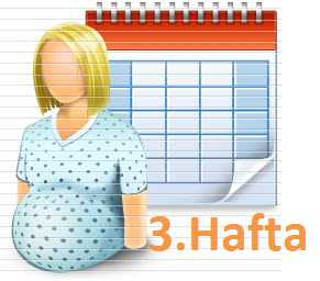 Gebelikte-3-Hafta_3b7b2.jpg