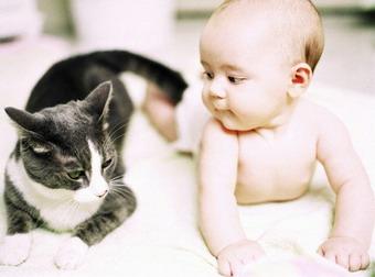 Bebek ve Hayvanların Dostluğu
