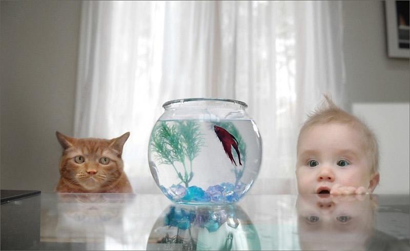 Akvaryumdaki Balığa Bakan Bebek ve Kedi