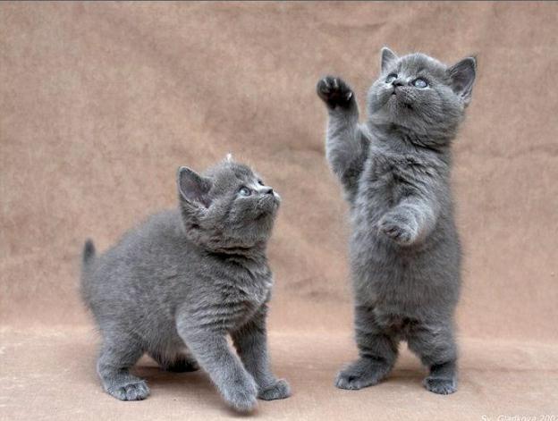 Bu Yavru Kediler Çok Komik