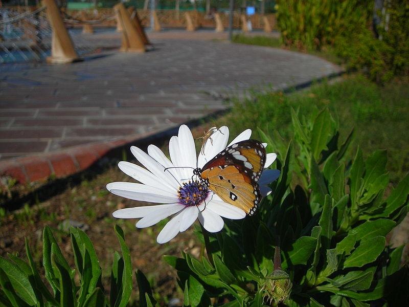 Çiçek Kelebek ve Örümcek