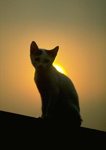 Gece Kedi