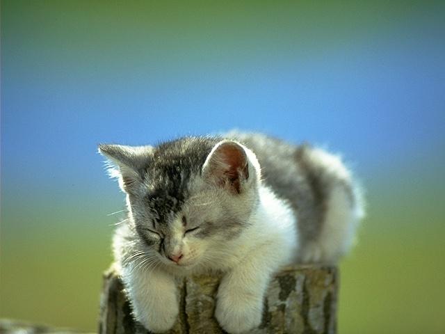 Kapalı Gözlü Kedi