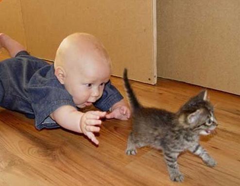 Kediyi Yakalamaya Çalışan Minik Bebek
