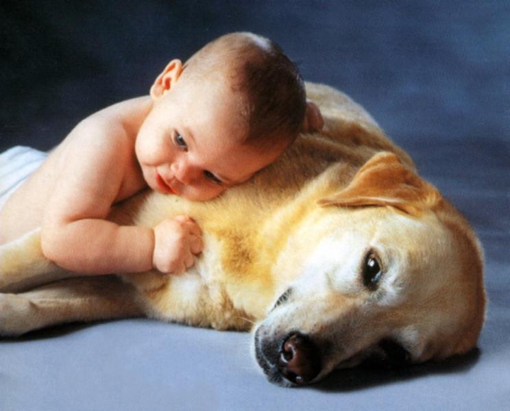 Köpeğin Üstünde Yatan Sevimli Bebek