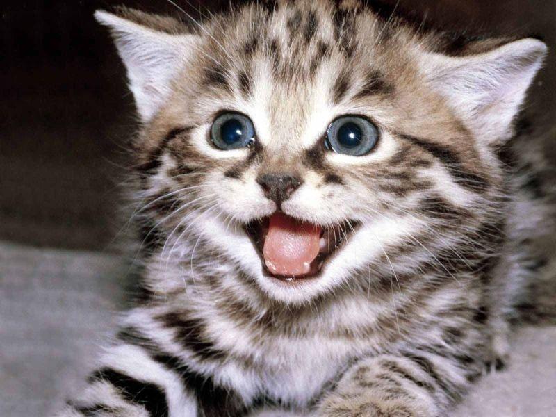 Özgür Kedi