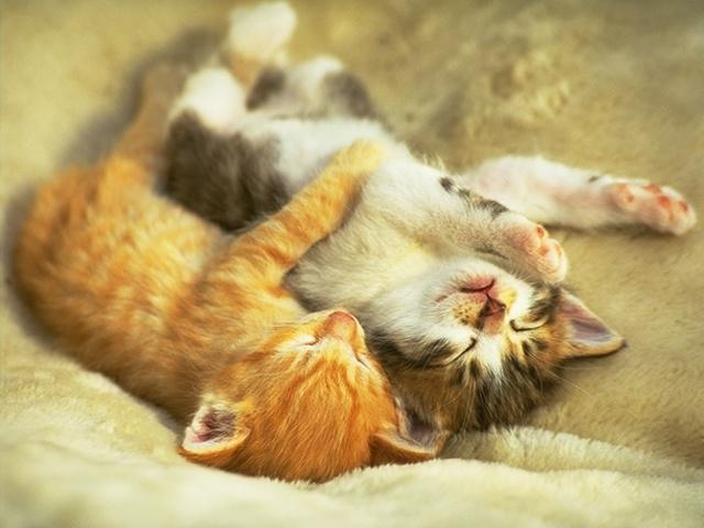 Uykucu Kedişler