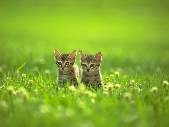 Yeşillikte Kedi